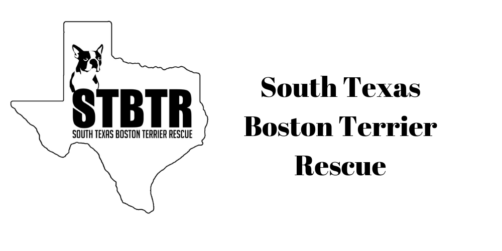 South Texas Boston Terrier Rescue