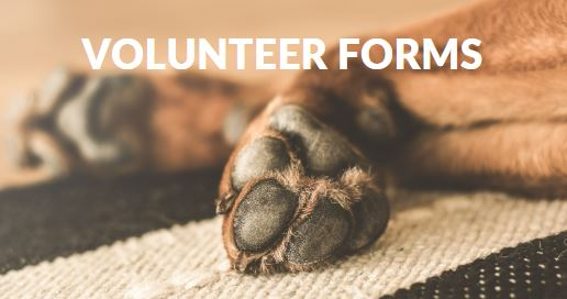 button to link you to sign up as a volunteer for South Texas Boston Terrier Rescue